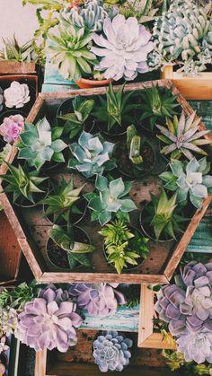 Simple. pretty garden / planting ideas