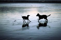 Pas de Deux 2 7 Year Olds, Moose Art, Dogs, Animals, Animaux, Doggies, Animales, Animal, Pet Dogs