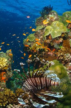 Great Barrier Reef, Australia  #City_Edge_Apartment_Hotels   #Cityedge    http://www.cityedge.com.au