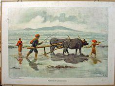 Inlandsche landbouwer, oude schoolplaten, indie, bali, indonesia