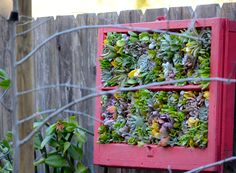 upcycled wood frame window makes a great vertical succulent planter! Designer/ Laura Eubanks at Design for Serenity Vertical Succulent Gardens, Planting Succulents, Outdoor Plants, Love Design, Serenity, Cool Designs, Planters, Pumpkin, Tapestry