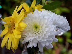 CCB  Hinos instrumental sinfônicos em um jardim florido