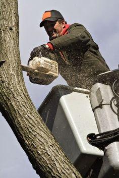 http://treeremovalsacramentoca.com Tree clearing service in Sacramento, California