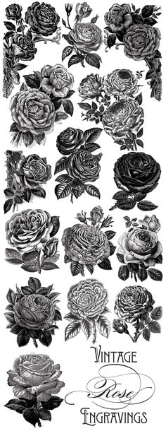 Vintage Rose Vector Graphics - Objects - 3