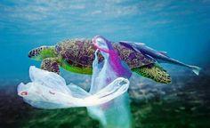 Águas de Pontal: Poluição plástica nos mares: problemas para a faun...