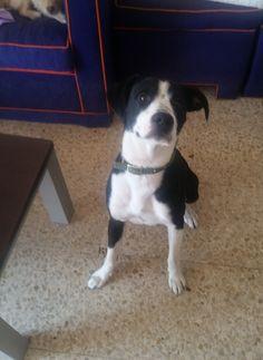 Adopta a Darco ( Mestizo ) - #adopta #perros