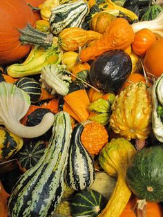 What to do with Ornamental Gourds – Page 3 – Dan330