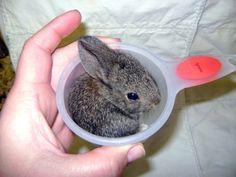 bunny cup!