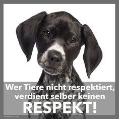 Tiere müssen respektiert werden!