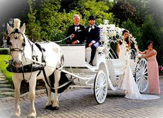 Dream Horse Carriage Company: Park Chateau WeddingsDream Horse Carriage Company Home of the Cinderella Carriages and Famous White Horses