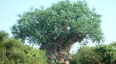 The Tree of Life at Animal Kingdom