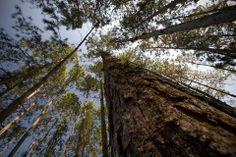 São mais de 35 mil árvores plantadas entre espécies brasileiras e estrangeiras.