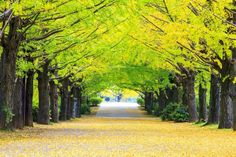 "In ""the most comprehensive plant aging study to date,"" scientists have finally cracked the reasons for the Ginkgo biloba tree's near-immortality."