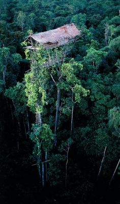 Treehouse.--Hope ye're not afraid of heights!