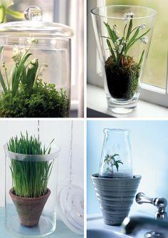 Terrarium Ideas