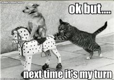 Funny Pictures with Captions | cat pushing dog on toy horse Funny dog photo with captions