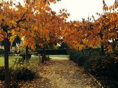 Autumn gardens Grange Bellinzona