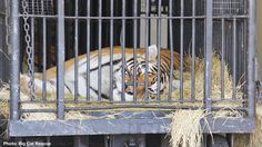 Ringling Brothers – Do the Right Thing and Retire Your Animals to TRUE Sanctuaries