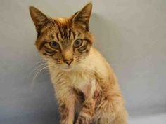SAFE!!! URGENT!!! NYC ACC - Friendly cat - large wound on the left front leg.  Needs medical.