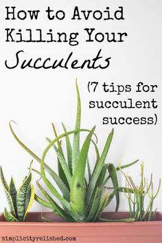 How to Avoid Killing Your Succulents: 7 Tips for Succulent Success | Simplicity Relished via http://simplicityrelished.com/avoid-killing-your-succulents/