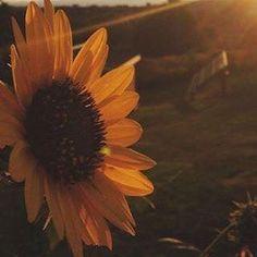 September, Plants, Plant, Planets