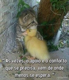 These cute kittens will make you happy. Cats are amazing companions. Photo Animaliere, Photo Chat, Cute Baby Animals, Animals And Pets, Funny Animals, Cute Baby Cats, Beautiful Cats, Animals Beautiful, Cute Cat Gif