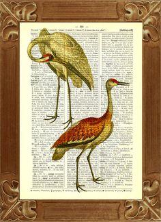 Bird art, Bird art Print, Red and Yellow Cranes print, Dictionary art print,  Vintage Birds illustration,nursery art, educational print