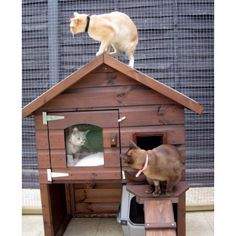 Emily Luxury Outdoor Cat House http://www.forshamcottagearks.com/outdoor-cat-houses/cat-chalet.html or http://www.gardenpine.com/shop/the-skeffington-mkii-outdoor-cat-housekennelshelter/