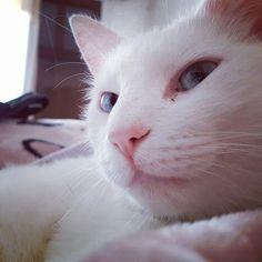 My white cat...is my love