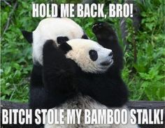 don't eff with the bamboo.