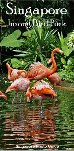 Jurong Bird Park, in Singapore, is the world's largest and best bird zoo | 50 Great Things to do with your family in Singapore (Free eBook).
