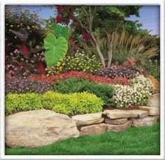 I am thinking it would be fun to landscape some areas in my backyard.  Looking for fun ideas