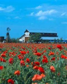 wildflowers farm fredericksburg texas - Bing images