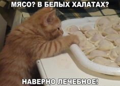 Little kitty wants Ukrainian pierogies! Hate Cats, Funny Cats And Dogs, Animals And Pets, Funny Animals, Cute Animals, Cat 2, Dog Cat, Cat Empire, Little Kitty