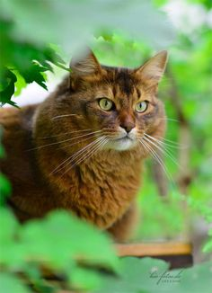"""A cat is a lion in a jungle of small bushes."" --Indian Proverb"
