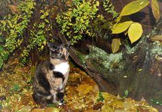 Bunte Frida und bunte Blätter, Foto: S.Hopp