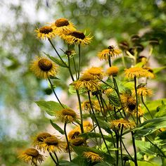 Bokeh - Flowers.