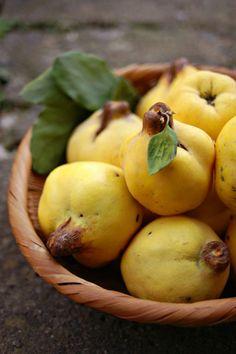 Quinces - MARMELO - O marmeleiro (Cydonia oblonga), é uma pequena árvore, único membro do género Cydonia, da família Rosaceae, cujos frutos são chamados marmelos. É originário das regiões mais amenas da Ásia Menor e Sudeste da Europa. Também é conhecido pelos nomes de marmeleiro-da-europa, marmelo e pereira-do-japão.Em Portugal é um fruto que não é normalmente consumido cru, mas cozido, geralmente fazendo-se marmelada.