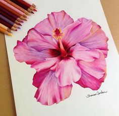 what should i draw Cool Art Drawings, Pencil Art Drawings, Beautiful Drawings, Colorful Drawings, Art Sketches, Horse Drawings, Colored Pencil Artwork, Color Pencil Art, Colored Pencils