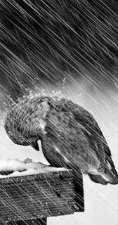 Beautiful Shot of a Bird or Owl caught in the Rain
