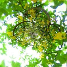 #きばな藤#藤#あしかがフラワーパーク#RICOH#theta #theta360 #littleplanet #栃木#Japan#全天球#メルヘン by motchan_7545 Ricoh Theta, Instagram Posts, Plants, Plant, Planets