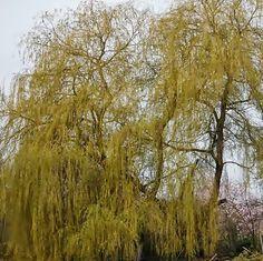 Natur und Leben: Zitat des Tages - Wer mit einem Baum sprechen........