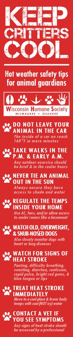 Keep your animals safe during hot summer months!