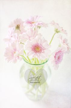 Pink Gerberas In A Vase {Light Textured Version}