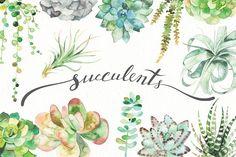 watercolor succulent set by LeraXendzova on @creativemarket
