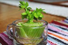 alimentos-que-se-pode-cultivar-a-partir-de-restos-de-comida