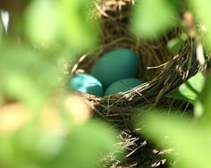The key to feathering your nest egg is to plan for your retirement no matter what season of life you are in right now. Here are some ways to get started whether you are 25 or 55.