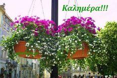 100+- Καλημέρες σε όμορφες εικόνες με λόγια....giortazo.gr - Giortazo.gr Good Morning, Plants, Photos, Buen Dia, Pictures, Bonjour, Plant, Good Morning Wishes, Planets