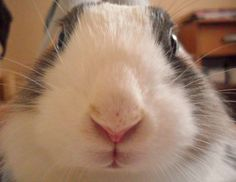 Closeup of bunny staring into the camera - September 27, 2013