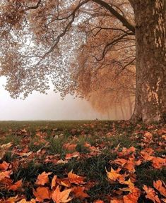 Image uploaded by Blue cat. Find images and videos about beauty, nature and autumn on We Heart It - the app to get lost in what you love. Autumn Scenes, Autumn Cozy, Autumn Feeling, Autumn Aesthetic, Autumn Photography, Fall Pictures, Foto Pose, Autumn Inspiration, Fall Season